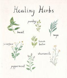no stress zone.  : taryndraws:   herb friends
