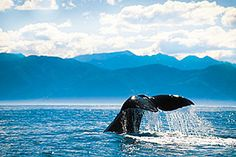 Whale watching is a fun activity to do, even with the kids!