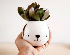 Cat ceramic plant pot Face planter Succulent planter di noemarin