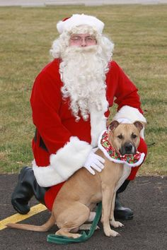 "ADOPTED!! URGENT!!! Lovable ""RUDOLPH"" Kennel # 18 is still waiting for a loving home with TLC!!!! Please stop by & meet this sweet boy soon!!!! LORAIN COUNTY DOG KENNEL..Elyria, OHIO https://www.petfinder.com/petdetail/31067547/"