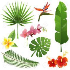 Conjunto De Hojas Y Flores Tropicales Ilustraciones Vectoriales, Clip Art…