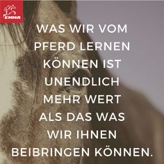 Besuche EMMA & spare: www. Horse Quotes, Animal Quotes, End Of Friendship, George Morris, Horse Saddles, Western Saddles, Equestrian Problems, Dressage Horses, Horse Training