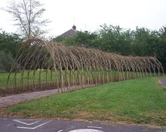 Living Willow  http://www.naturalfencing.com/lev4_3_0_0_Living_Willow.asp