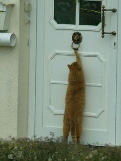Kimdir Kapıyı Çalan?