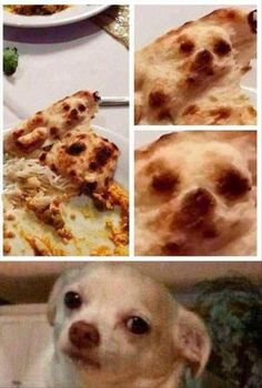22 Funny Animal Pictures Of The Day - Funny Animals - Daily .- 22 Funny Animal Pictures Of The Day – Funny Animals – Daily LOL Pics 22 Funny Animal Pictures Of The Day - Funny Animal Jokes, Crazy Funny Memes, Really Funny Memes, Stupid Funny Memes, Funny Relatable Memes, Haha Funny, Funny Animal Pictures, Funny Dogs, Funny Animals