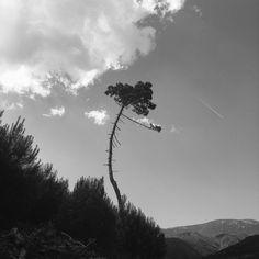 Naturaleza en blanco y negro