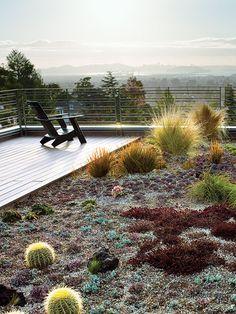 This rooftop garden is constantly exposed to sun! öðrvísi en flottur gróður…