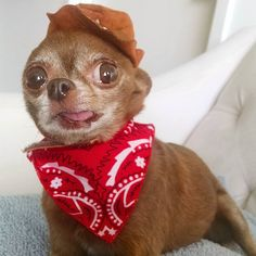 dog イヌ 犬可愛い画像まとめ http://ift.tt/1pScYAu