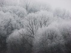 The winter trees look like negatives of photos shot in whites and blacks.