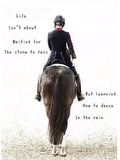Horse – horse Pferde – horse – - Art Of Equitation Funny Horses, Cute Horses, Horse Love, Horse Girl, Beautiful Horses, Equine Quotes, Equestrian Quotes, Equestrian Outfits, Equestrian Fashion