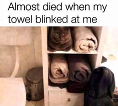 Cute Animal Memes, Funny Animal Quotes, Animal Jokes, Funny Animal Videos, Funny Animal Pictures, Cute Funny Animals, Animal Pics, Hilarious Animal Memes, Crazy Funny Memes