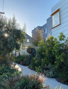 sidewalk garden in san francisco