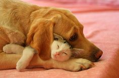 Precious. This is how my cat and dog are going to be<3