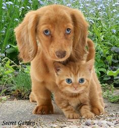 Hi is your puppy biting you, here is solution to all www.marshallspetz… Hi is your puppy biting you, here is solution to all www. Cute Baby Animals, Animals And Pets, Funny Animals, Funniest Animals, Funny Pets, Small Animals, Cute Kittens, Cats And Kittens, Cute Cats And Dogs