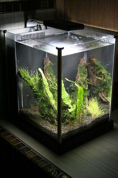 fluval_spec_ii.jpg, small aquarium