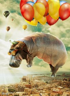 Flying Away. When hippos fly they fly away. Wouldn't want to be down below when the ballons break.