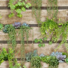 Buy Sfe Palissa Vegetal Wallpaper from Graham and Brown. Bring the outdoors in with the vibrant Palissa Vegetal wallpaper. The combination of the reclai. Wallpaper Decor, Green Wallpaper, Wallpaper Roll, Papier Paint, Cool Sheds, Clapboard Siding, Simple Wallpapers, Shed Design, Summer Glow