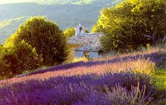 Delightful holiday houses to rent in the heart of The Luberon or The Alpilles, Provence, Southern France Places To See, Places To Travel, Lavender Fields, Lavander, Flora, Provence France, French Countryside, Jolie Photo, What A Wonderful World