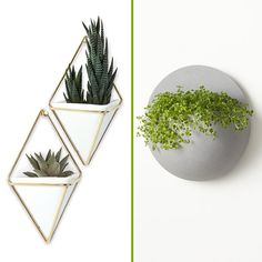 Great for small spaces, these styles work best for small succulents, ferns, or air plants that don't need a lot of water.