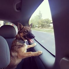 I dont like cars but this one... ok is fine  #lexithelady #lexithedog #anothertrip #puppy #dogtag #puppylove #dogs_of_instagram #puppys world