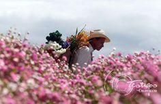 Medellin flores