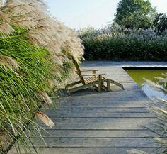 Pool mit Miscanthus (Chinaschilf) umpflanzt. Chinaschilf ist während der Badesaison je nach Sorte gut und gern 170 cm hoch. Perfekter Sichtschutz.