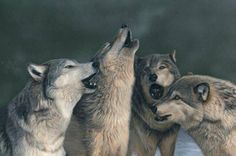 The pack.  Beautiful!