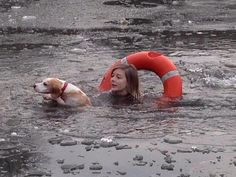 After a pet Beagle ran across a frozen lake to chase a bird, bystanders were horrified when the animal fell through the icy surface. Within seconds, the Beagle's young owner jumped — fully clothed — into the frozen London lake. According to witnesses, the young woman punched through the solid ice to get to her dog, and she finally dragged the frightened hound out of the lake.