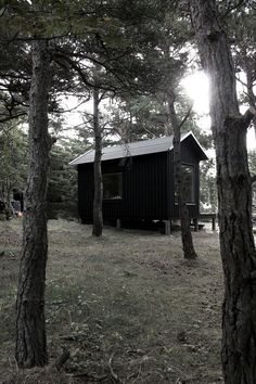compact-plywood-pine-cabin-with-attached-sauna-2-far.jpg