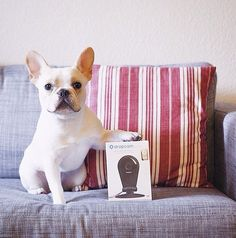 Friends can come in all different shapes and sizes. Espo with his Dropcam.