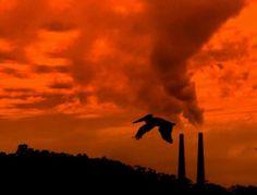 Emissioni di carbonio: mai così alte da 66 milioni di anni