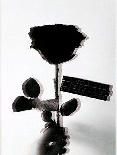 New wallpaper celular preto e rosa Ideas Aesthetic Roses, Aesthetic Images, Cool Wallpapers For Phones, Cute Wallpapers, Black Aesthetic Wallpaper, Aesthetic Wallpapers, Flower Wallpaper, Wallpaper Backgrounds, Fred Instagram
