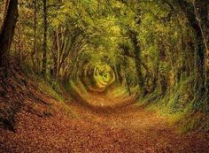 Walk throught the stunningly beautiful tree tunnel of Ashdown Forest in West Sussex Beautiful Forest, World's Most Beautiful, Beautiful World, Beautiful Places, Beautiful Pictures, Trees Beautiful, Amazing Photos, Nature Pictures, Beautiful Landscapes
