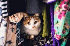 """La vedette de ce cliché : Nero, l'un de deux chats de la photographe néerlandaise Felicity Berkleef. """"C'est une de mes photos favorites. J'aime les couleurs et l'histoire racontée. C'est comme si Nero me disait : pourquoi est-ce que tu me photographies ? Est-ce que je peux juste me relaxer quelques minutes ?"""""""