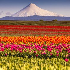 Osorno Volcano, Los Lagos Region, Chile.