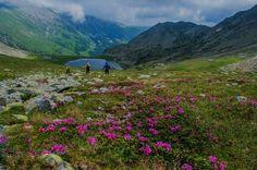Flora, Mountains, Nature, Travel, Naturaleza, Viajes, Plants, Destinations, Traveling