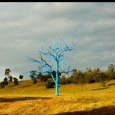 Blue Tree... The Australian Botanic Garden, Mount Annan  NSW, Australia
