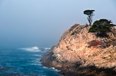 Coastal scene from Point Lobos State Reserve