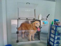 Conozcamos más sobre la vida de nuestros canes. Hoy tratamos los beneficios de la canela en los perros y cómo mejorará su calidad de vida
