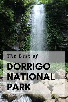 Dorrigo National Park - The best things to do on a day trip! Australia Beach, Australia Travel, Weekend Trips, Day Trip, Travel Advice, Travel Tips, Travel Guides, Meanwhile In Australia, East Coast Road Trip