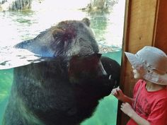 Bos at Cheyenne Mountain Zoo