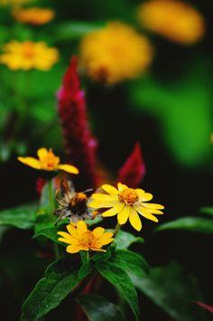 Flower  Beautiful  Yellow  Green  Shadow  Light
