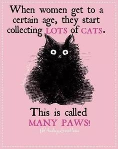 But I've always had lots of cats since I was a kid. But I've always had lots of cats since I was a kid. But I've always had lots of cats since I was a kid. But I've always had lots of cats since I was a kid. Funny Cats, Funny Animals, Cute Animals, It's Funny, Cats Humor, Funny Memes, Funny Horses, Funny Cat Quotes, Cat Sayings