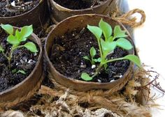 Upcycle your paper towel rolls into seedling pots! #gardening #diy #upcycle