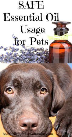 Safe Essential Oil Usage for Pets #essentialoils