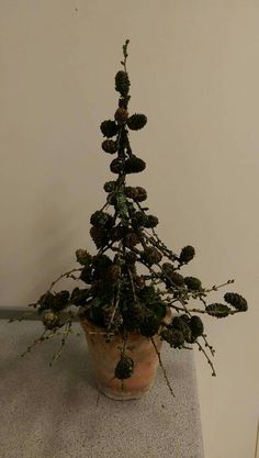 Larch branch Christmas tree...love love larch