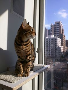Here's Imani on her new Perch, gazing out at the Manhattan skyline.