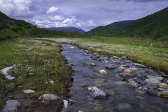 Moose Creek in Denali National Park  Preserve