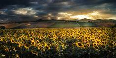 Cultiveted fields by Nicodemo Quaglia on 500px