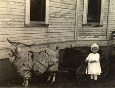 The picture was taken in 1915, and the little girl pictured is Elizabeth Elder. She is pictured next to her dandy goat cart, and halter trained transportation goat.  At the turn of the 20th Century, it was quiet common to harness goats for this purpose.